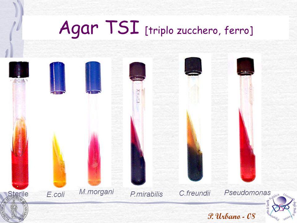 Agar TSI [triplo zucchero, ferro]